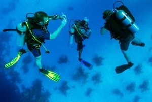 From Scuba Diving in the Aegean Sea