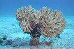 Bodrum Diving Festival
