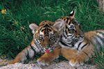 Arcachon Basin Zoo - Zoo de Bassin d'Arcachon
