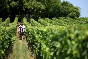 From Saint-Emilion Wine Tasting Experience