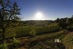 Saint Emilion: Guided Winery Tour & Wine Tasting