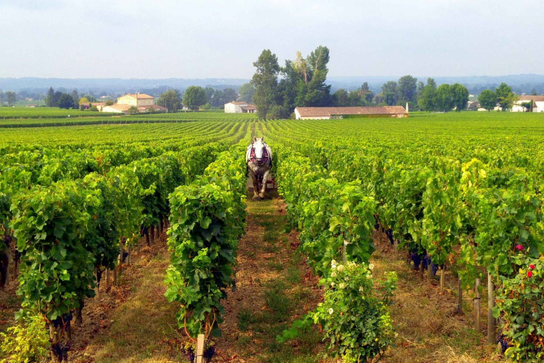 Saint-Emilion: Wine and Bike Tour