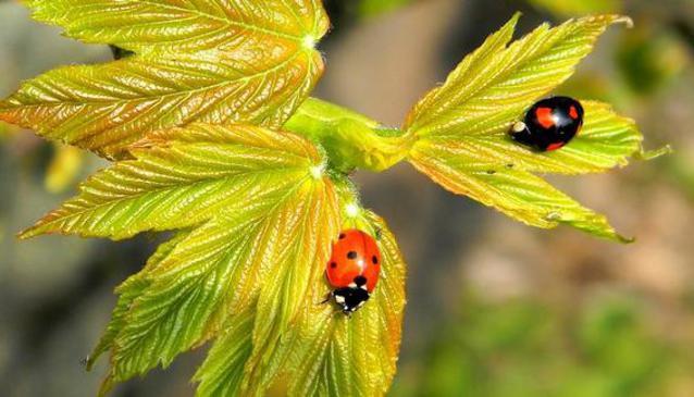 The Ladybug Park or Parc Animalier La Coccinelle