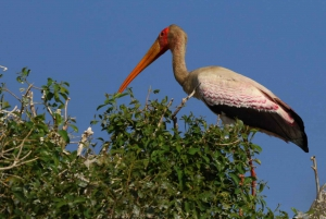 Chobe National Park: 3-Hour Game Drive