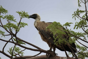 Chobe National Park: Game Drive, Boat Tour, and Lunch