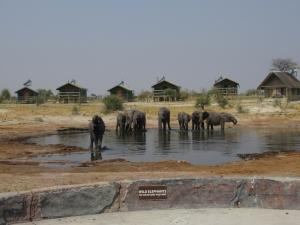 Elephant Sands Lodge
