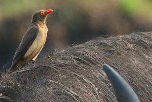 From Kasane: Chobe National Park Overnight Camping Safari