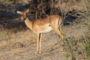 From Maun: Moremi Game Reserve Tour