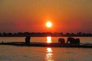 From Victoria Falls: 3-Day Chobe Camping Safari