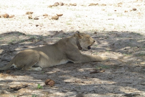 From Victoria Falls: Chobe National Park Private Tour