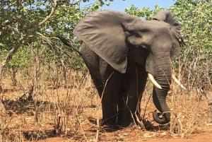 From Victoria Falls: Chobe National Park Safari and Cruise