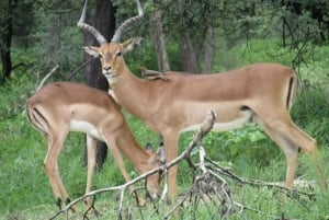 Gaborone: Game Drive and City Sightseeing Tour