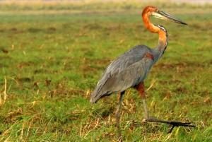 Kasane: Chobe National Park Full-Day Game Drive Safari