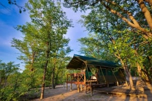 Mankwe Bush Lodge & campsite