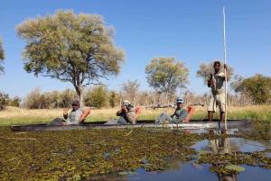 Maun: Okavango Delta Mokoro Tour and Bush Walk