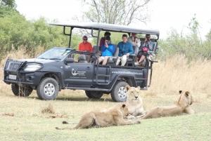 Maun: Overnight Guided Moremi Game Reserve Safari Tour