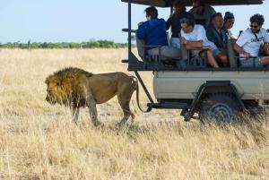 Maun: Private Guided Day Safari in Moremi Game Reserve