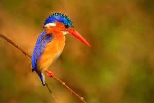 Okavango Delta: Wildlife Boat Tour to Chief's Island