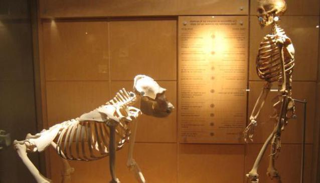 Musée des Sciences Naturelles (Natural History Mus