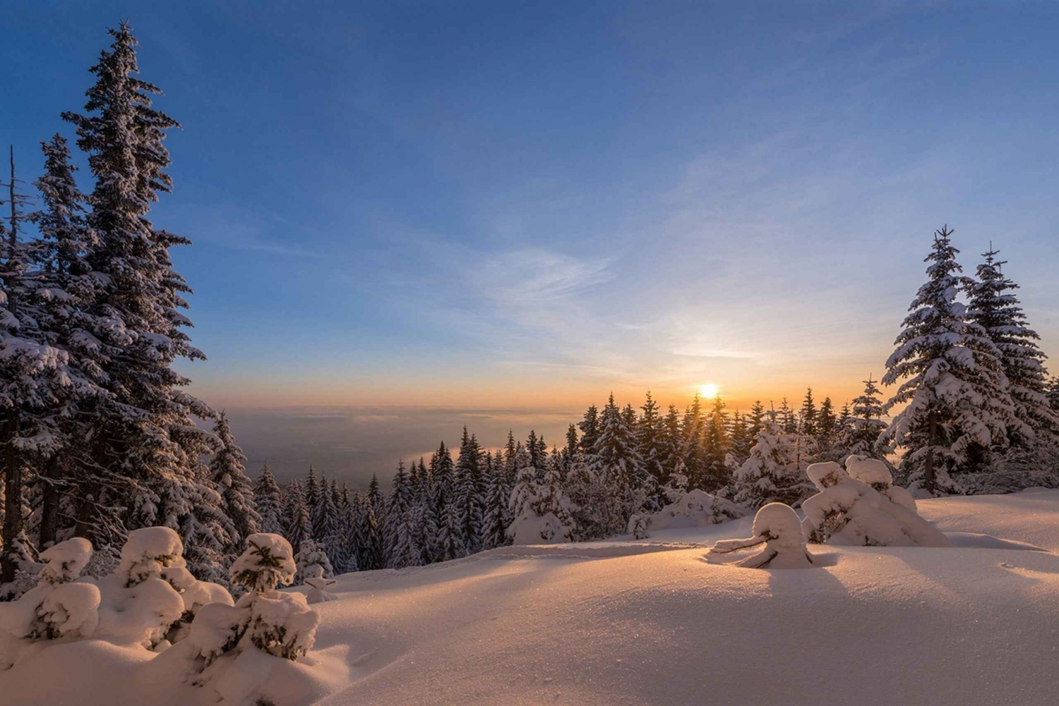 From Sofia: Snowshoe Hike on Vitosha Mountain