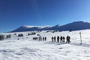 Sofia: Black Peak-Vitosha Mountain Snowshoeing Day Trip