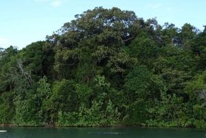 Brunswick River: Morning Eco Rainforest River Cruise