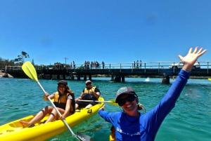 Brunswick River Scenic Kayak Tour