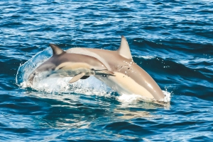 Byron Bay: Cruise with Dolphins Tour