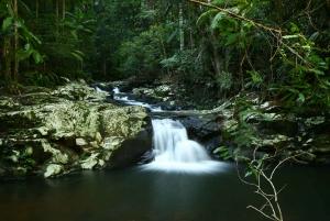 Byron Bay: Hinterland Magic and Glow-Worm Experience