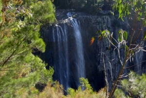 Byron Bay Hinterland: National Park and Waterfalls Tour