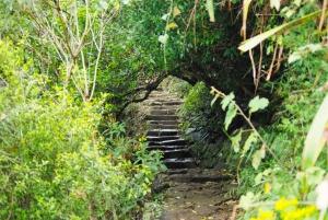Byron Bay Hinterland: National Park and Waterfalls Tour