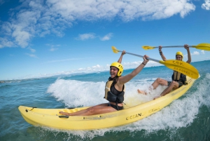 Byron Bay: Kayak with Dolphins Tour