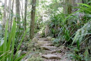 Byron Bay: Minyon Falls and Ocean Kayak Tour with BBQ Lunch