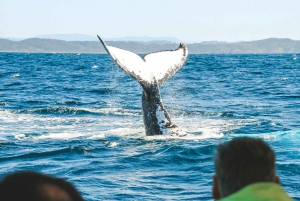 Byron Bay: Premier Whale Watch Cruise with Marine Biologist