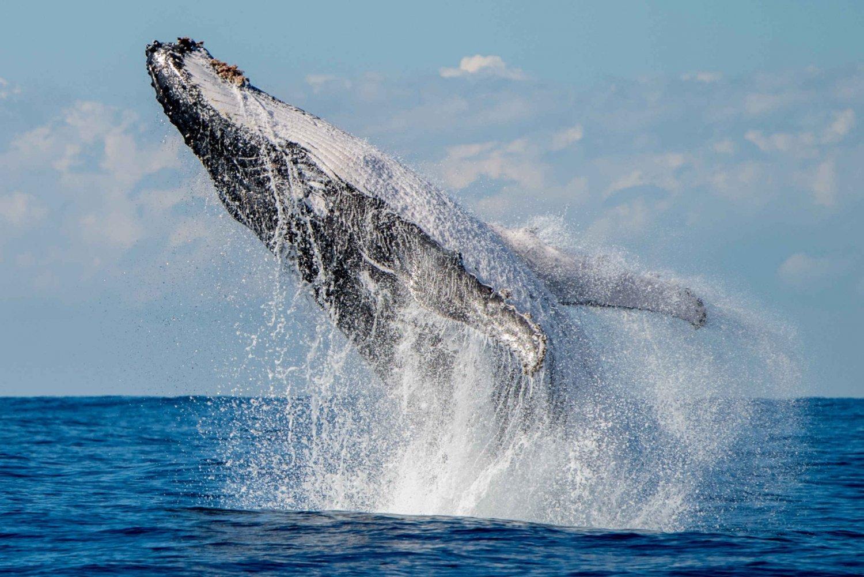 Byron Bay Premium Whale Watch Cruise with Marine Biologist