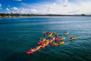 Byron Bay: Sea Kayak Tour