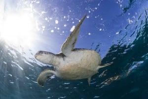 Byron Bay: Sea Turtle Snorkel Tour in Julian Rocks Reserve