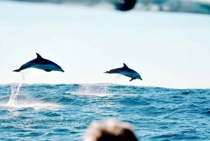 Cruise with Dolphins Tour
