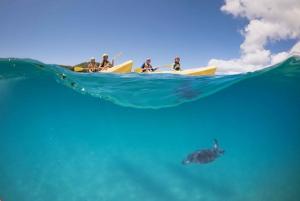 Kayak with Dolphins Tour
