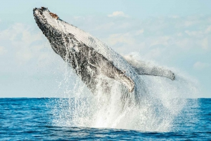 Premier Whale Watch Cruise with Marine Biologist