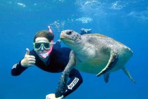 Sea Turtle Snorkel Tour in Julian Rocks Reserve