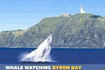 Whale Watching Byron Bay