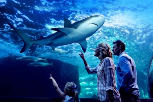 Aquarium by Night with 3-Course Dinner