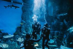 Aquarium Reef Tank Diving Experience