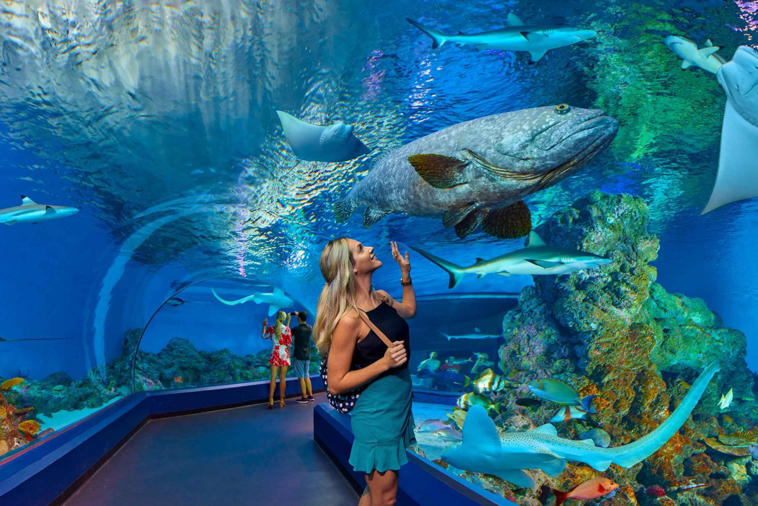 Aquarium Visit and City Sightseeing Tour with Lunch