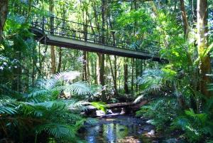 Atherton Tablelands, Mossman Gorge and Daintree Tour