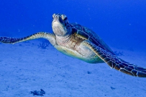Cairns: 2-Day Great Barrier Reef Dive and Snorkel Boat Trip
