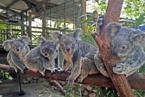 Cairns: 4 Attraction 7-Day Pass