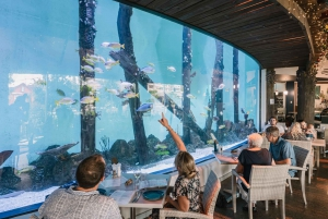 Cairns Aquarium: Twilight Ancient Oceans Tour with Dinner