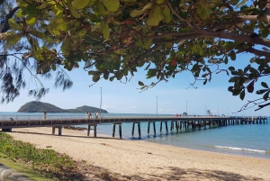 Cairns: Aquarium Visit and City Sightseeing Tour with Lunch
